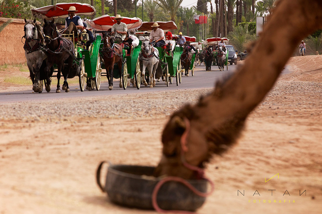 WEDDING-MARRAKECH-065