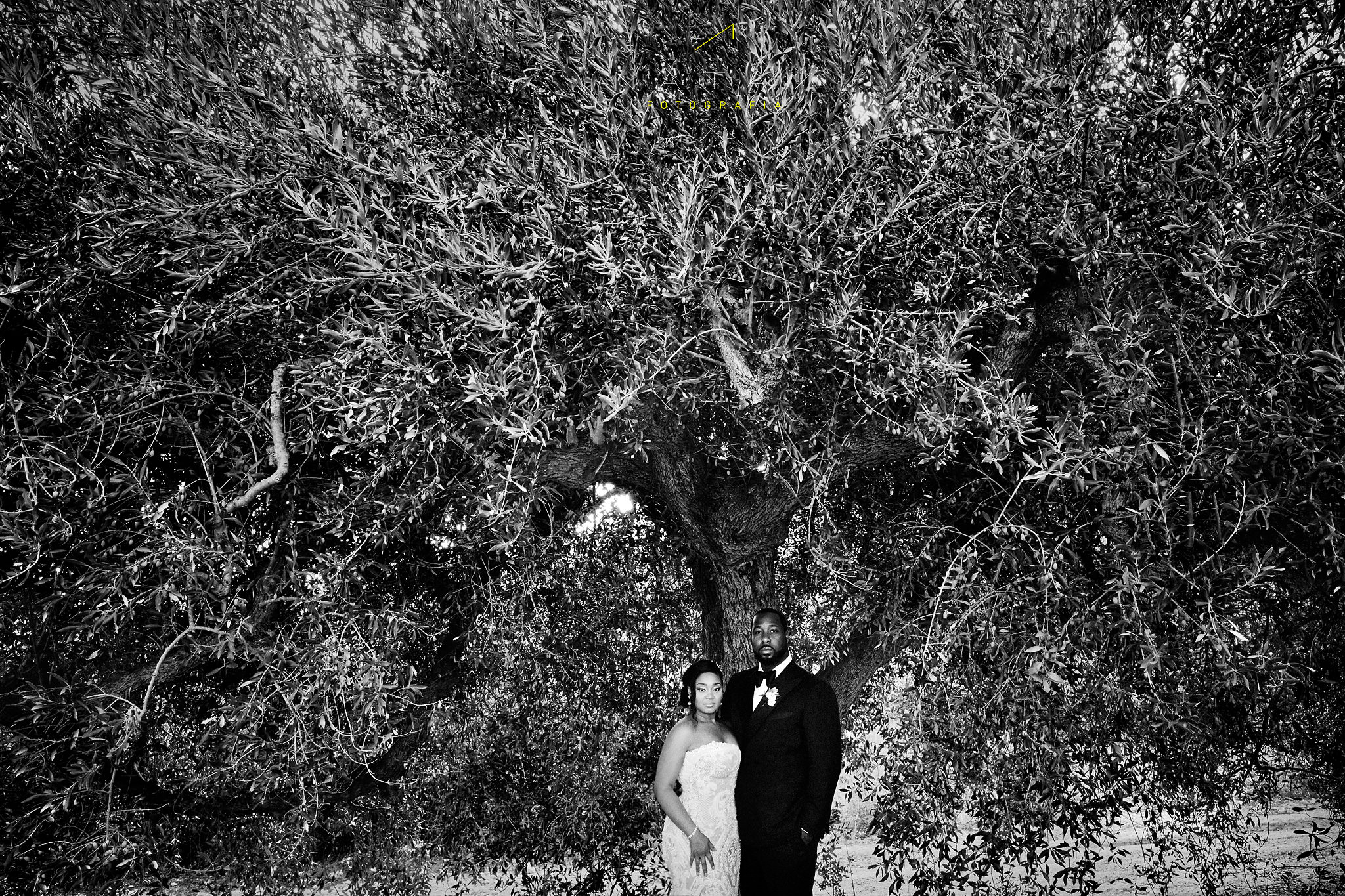 cool bride and groom under olive tree